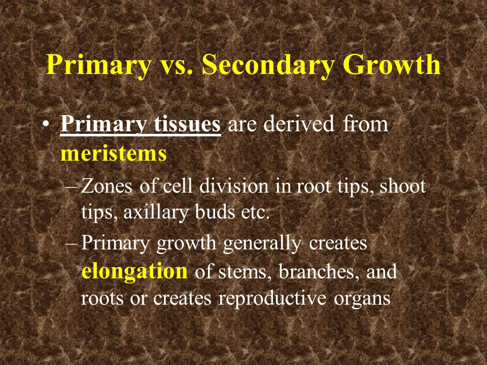 Primary vs. Secondary Growth Primary tissues are derived from meristems –Zones of cell division in root tips, shoot tips, axillary buds etc. –Primary