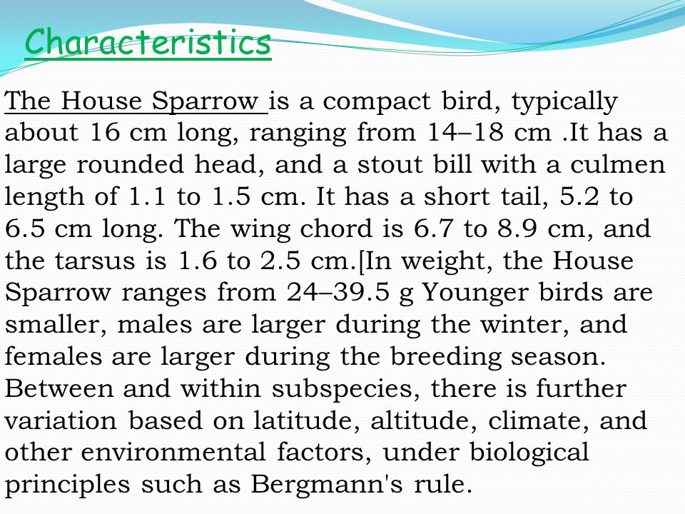 The House Sparrow is a compact bird, typically about 16 cm long, ranging from 14–18 cm.It has a large rounded head, and a stout bill with a culmen len