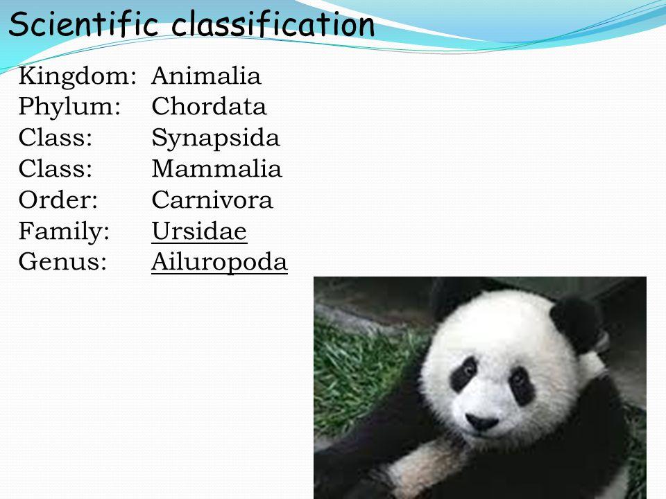 Kingdom:Animalia Phylum:Chordata Class:Synapsida Class:Mammalia Order:Carnivora Family:Ursidae Genus:Ailuropoda Scientific classification