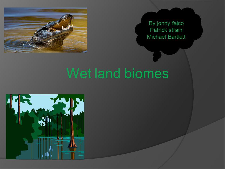 Wet land biomes By:jonny falco Patrick strain Michael Bartlett