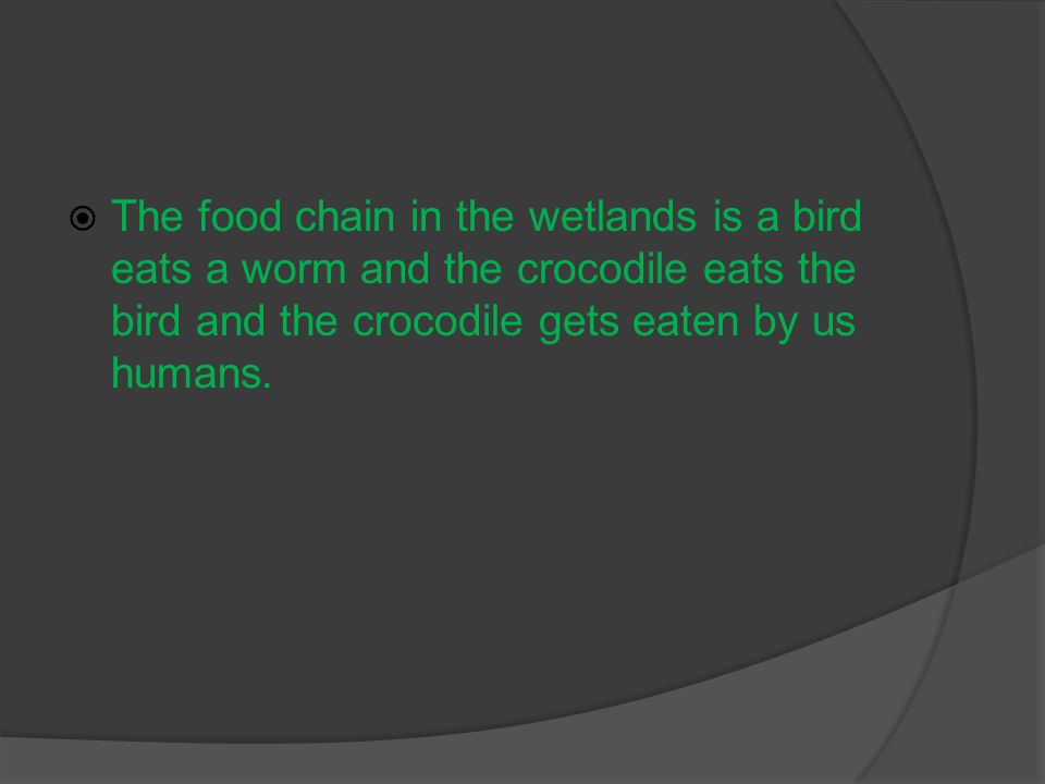  The food chain in the wetlands is a bird eats a worm and the crocodile eats the bird and the crocodile gets eaten by us humans.