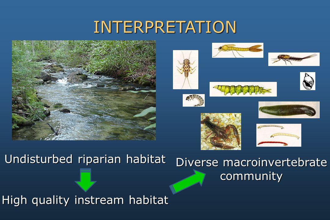 INTERPRETATION Diverse macroinvertebrate community Undisturbed riparian habitat High quality instream habitat