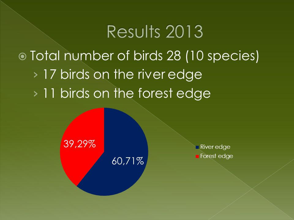  Total number of birds 28 (10 species) › 17 birds on the river edge › 11 birds on the forest edge