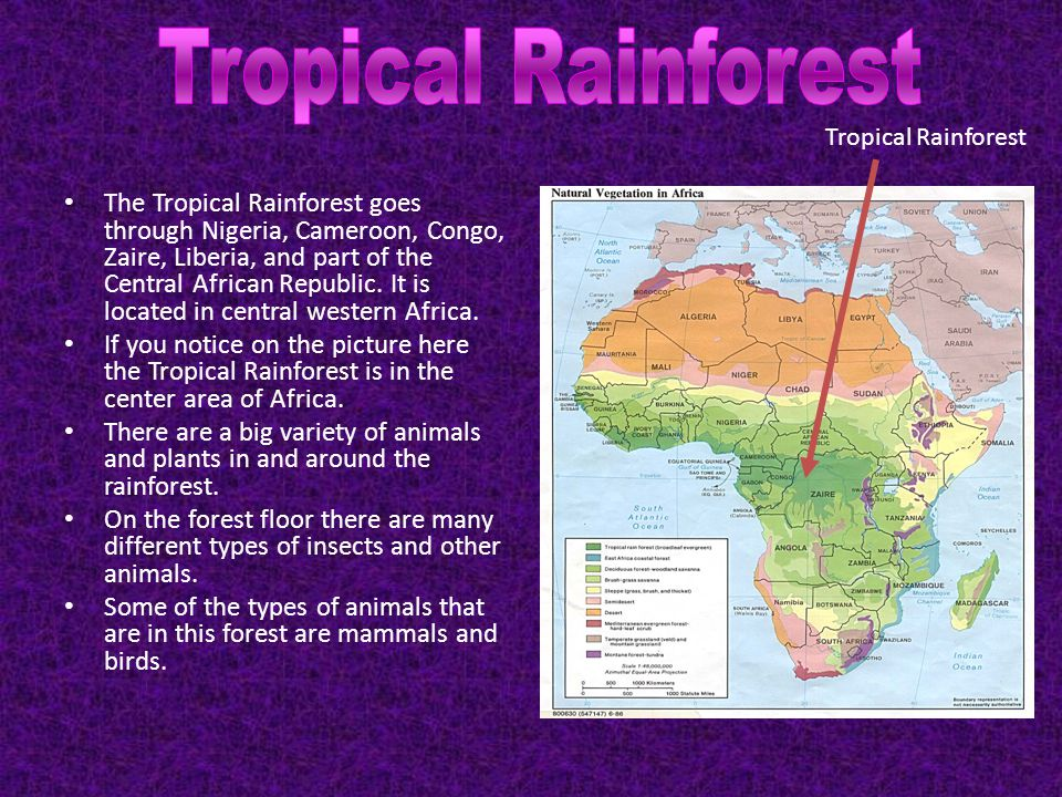 The Tropical Rainforest goes through Nigeria, Cameroon, Congo, Zaire, Liberia, and part of the Central African Republic. It is located in central west
