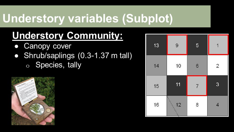 Understory variables (Subplot) Understory Community: ●Canopy cover ●Shrub/saplings (0.3-1.37 m tall) o Species, tally