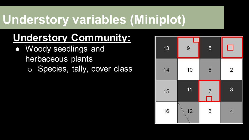 Understory variables (Miniplot) Understory Community: ●Woody seedlings and herbaceous plants o Species, tally, cover class