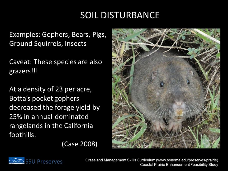 SOIL DISTURBANCE Examples: Gophers, Bears, Pigs, Ground Squirrels, Insects Caveat: These species are also grazers!!.
