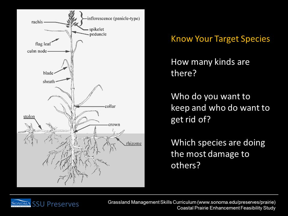 Know Your Target Species How many kinds are there.