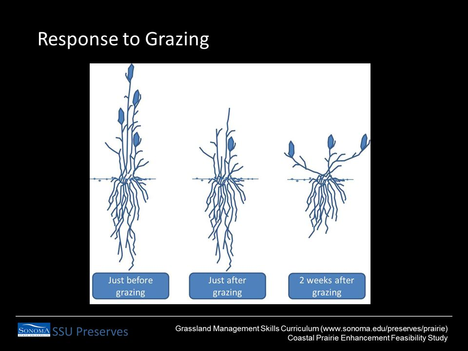 Response to Grazing