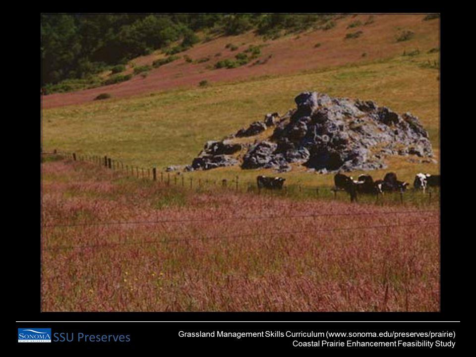 GRAZING, FIRE & SOIL DISTURBANCE Shrub clearance Tolerant grassland species