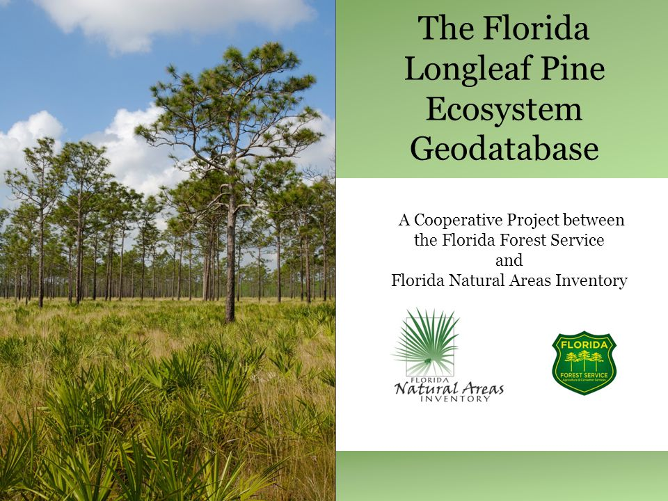 The Florida Longleaf Pine Ecosystem Geodatabase A Cooperative Project between the Florida Forest Service and Florida Natural Areas Inventory