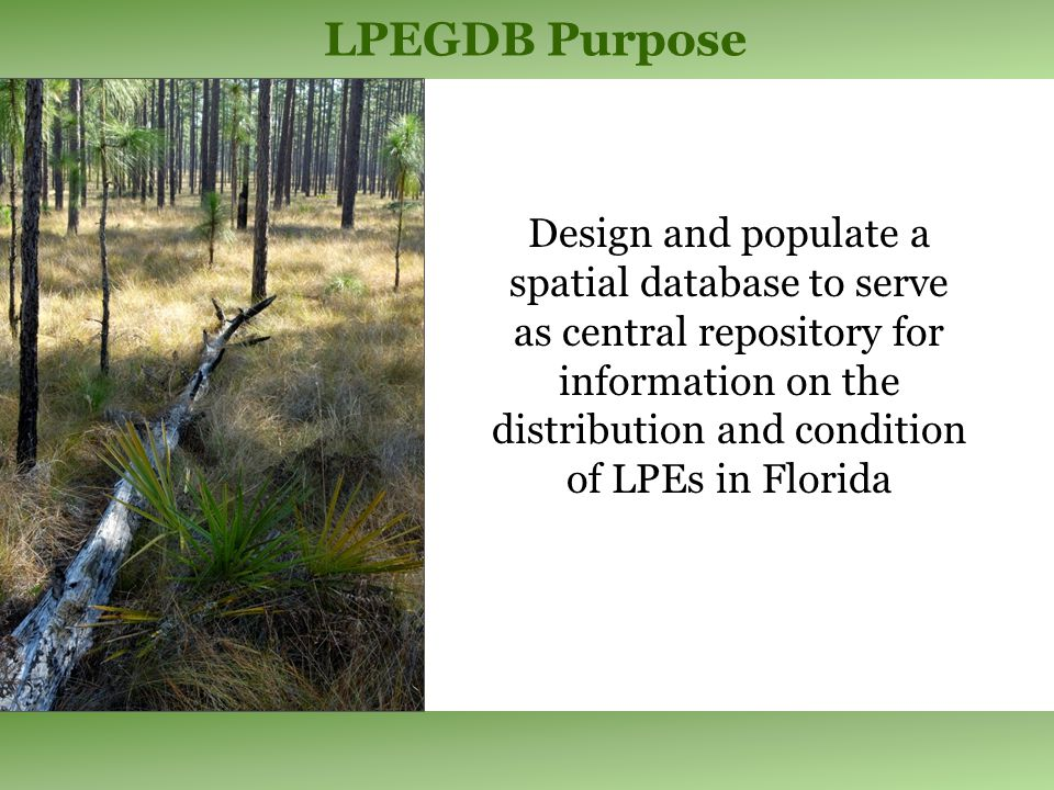 Field Attributes Longleaf Pine DominanceShrub Cover Longleaf Pine Age StructurePyrogenic Grass Cover Longleaf Pine Basal AreaHerbaceous Cover Turkey Sand Post CoverFire Evidence Other Hardwood CoverInvasive Plant Distribution Other Pine CoverCondition Rank Midstory CoverNatural Community Type Rapid Assessment Design Presence and dominance of LLP in the Canopy Dominant Codominant Occasional-rare Absent Cover of woody plants < 6 ft tall <1%26 - 35%66 - 75% 1 - 5%36 - 45%76 - 85% 6 - 15%46 - 55%86 - 95% 16 - 25%56 - 65%96 - 100%