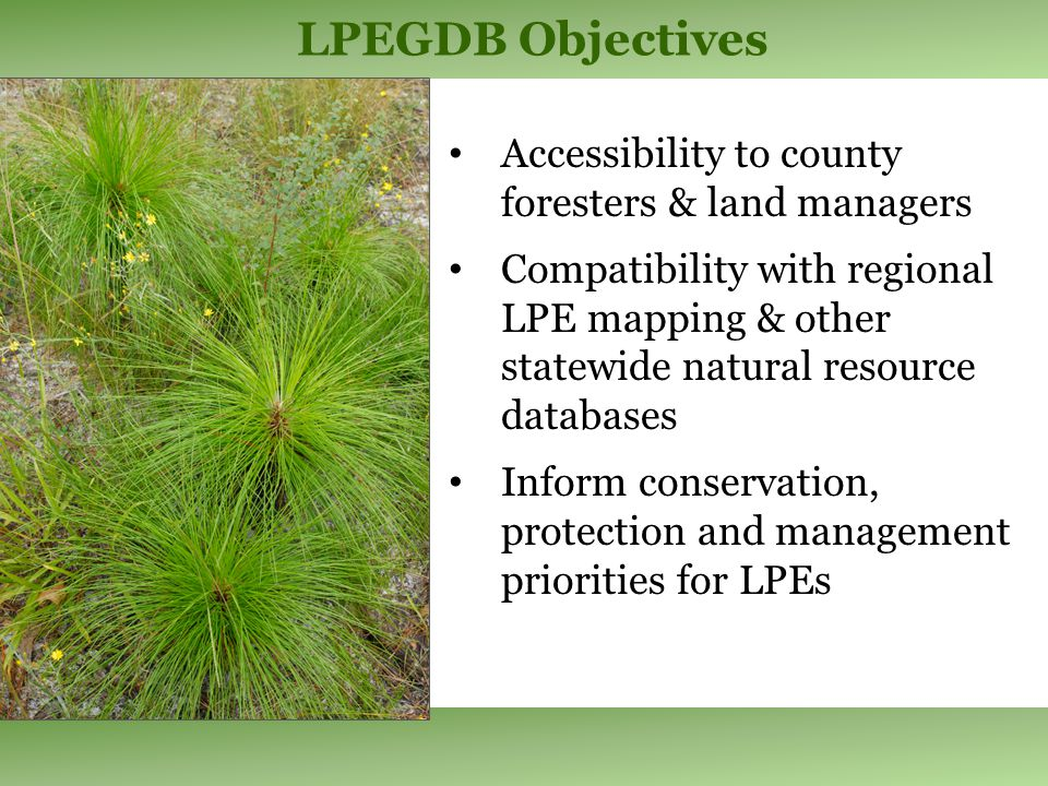 LPEGDB v.2 Summary LPEs confirmed on 2.2 million acres in Florida 76% with ecological condition data 40% on private lands An additional 300,000 acres of Longleaf natural communities identified from aerial photos