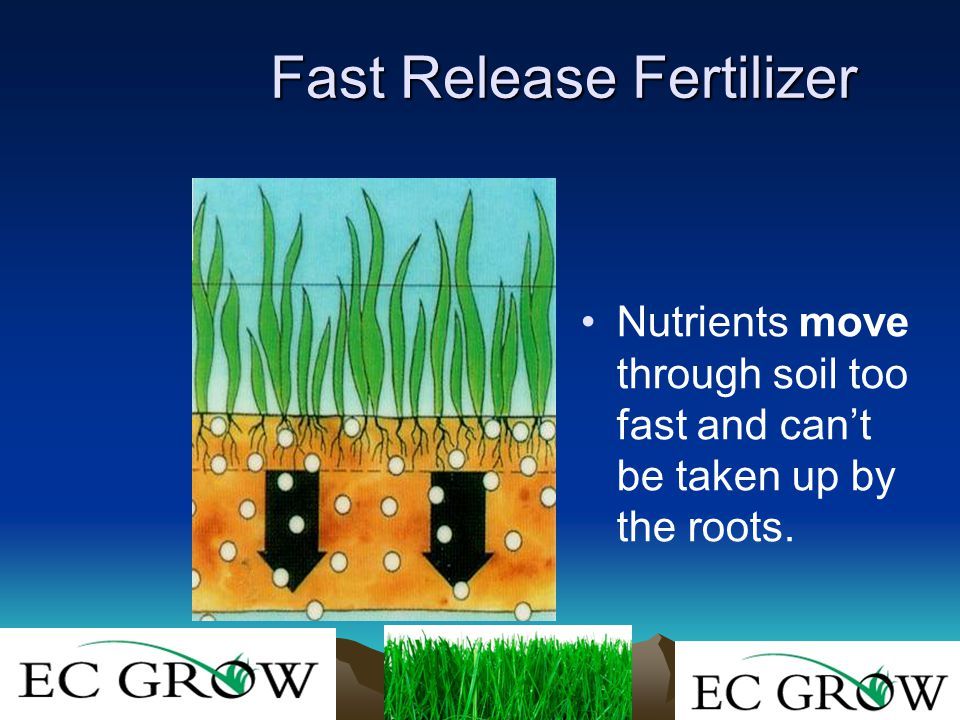Fast Release Fertilizer Nutrients move through soil too fast and can't be taken up by the roots.