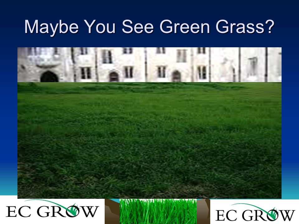 Considerations Frequency of applications Soil requirements Turf Species Weather/timing What Do You want to Accomplish?