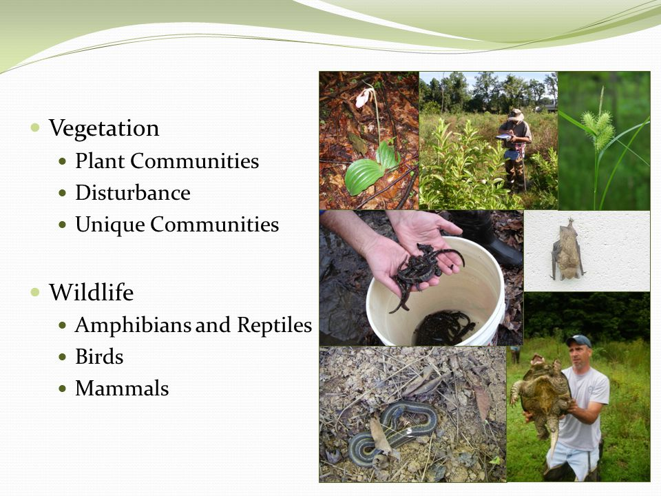 Vegetation Plant Communities Disturbance Unique Communities Wildlife Amphibians and Reptiles Birds Mammals