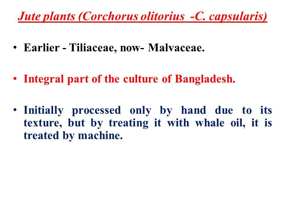 Jute plants (Corchorus olitorius -C. capsularis) Earlier - Tiliaceae, now- Malvaceae.