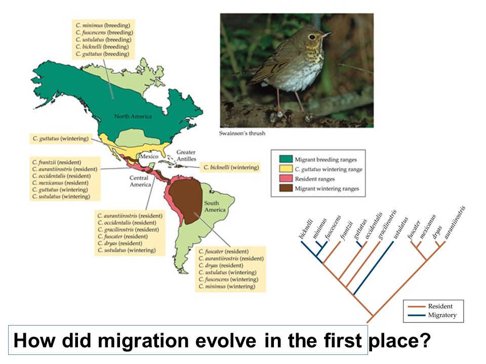 How did migration evolve in the first place