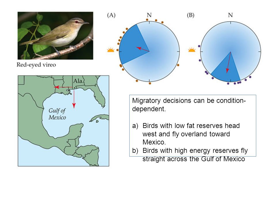 Migratory decisions can be condition- dependent.