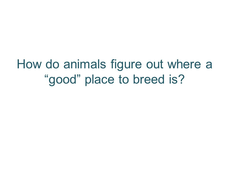 How do animals figure out where a good place to breed is