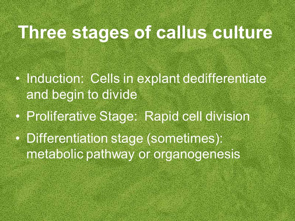 Three stages of callus culture Induction: Cells in explant dedifferentiate and begin to divide Proliferative Stage: Rapid cell division Differentiation stage (sometimes): metabolic pathway or organogenesis
