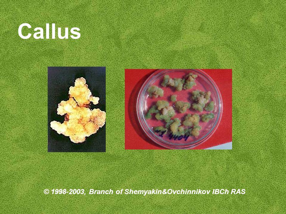 Callus © 1998-2003, Branch of Shemyakin&Ovchinnikov IBCh RAS