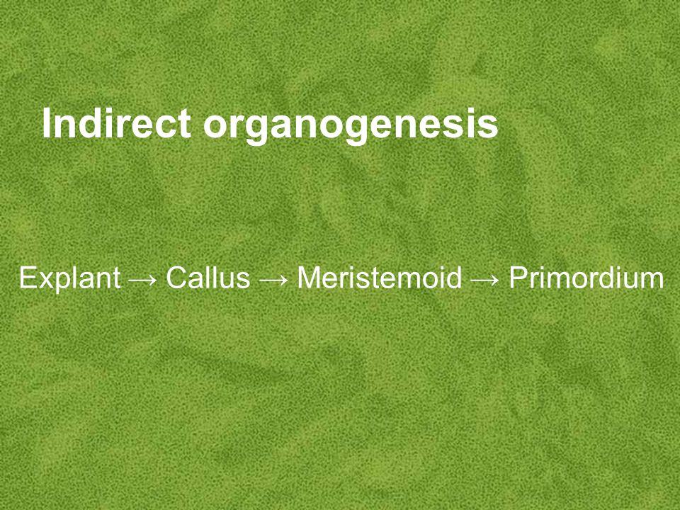 Indirect organogenesis Explant → Callus → Meristemoid → Primordium