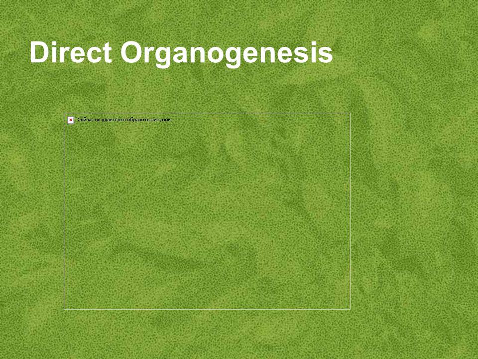 Direct Organogenesis