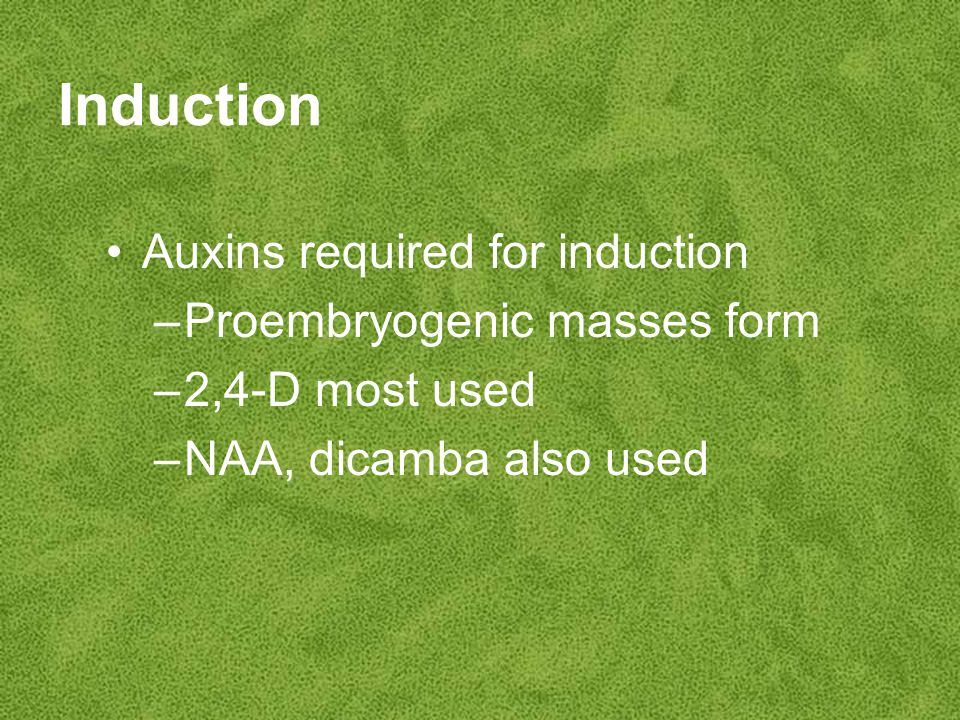 Induction Auxins required for induction –Proembryogenic masses form –2,4-D most used –NAA, dicamba also used
