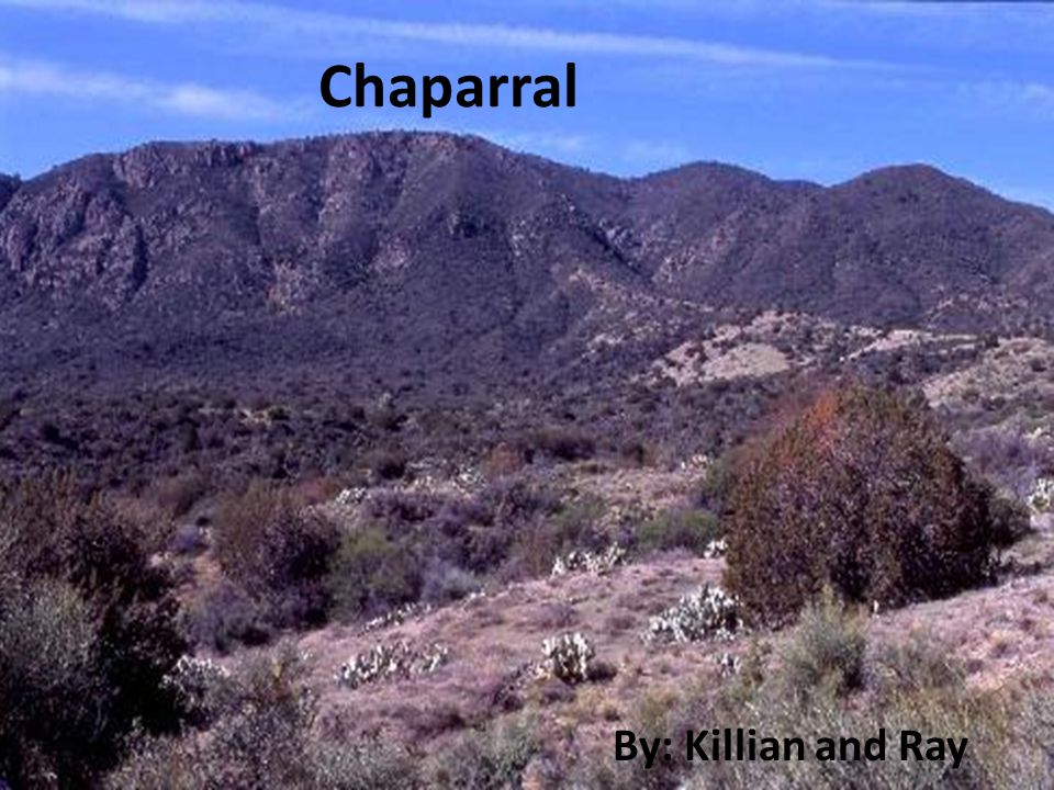 The Chaparral (Scrub Forest) It is the smallest Biome Found on 5 of the world's continents: In Europe and Africa it is found around the Mediterranean as well as around Cape town, it is found on the southern and western tips of Australia, in southern California, and on the coast of Chile.