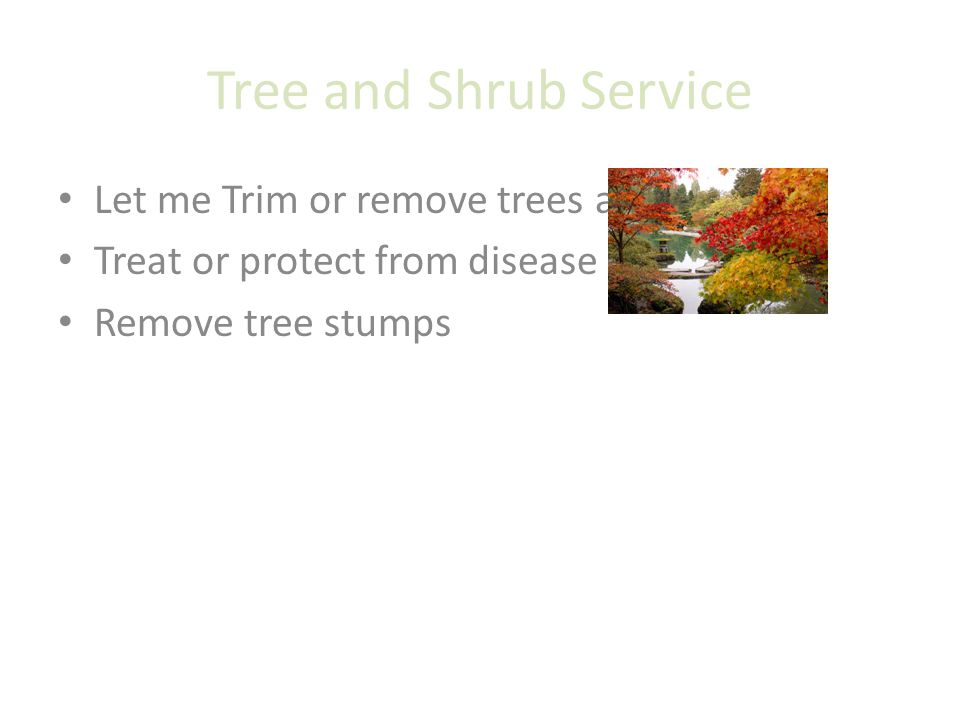 Tree and Shrub Service Let me Trim or remove trees and shrubs Treat or protect from disease Remove tree stumps