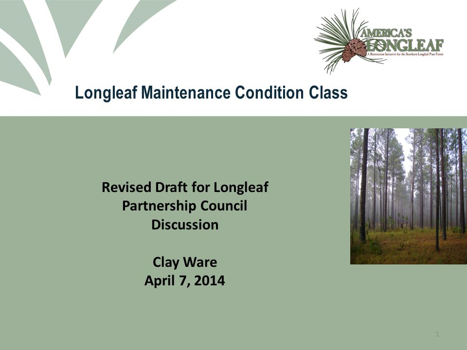 2 Longleaf Pine Maintenance Condition Class Definitions A Guide to Assess Optimal Forest Habitat Conditions for Associated Plant and Wildlife Species The Range-wide Conservation Plan for Longleaf Pine calls for doubling the acreage of longleaf pine in the maintenance condition class.