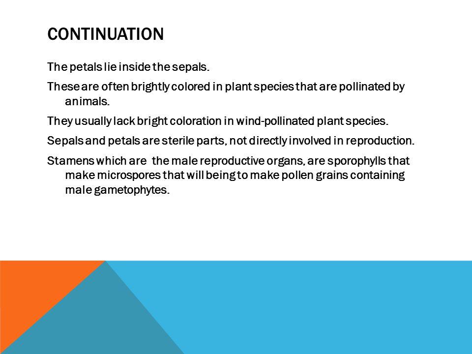 CONTINUATION The petals lie inside the sepals.