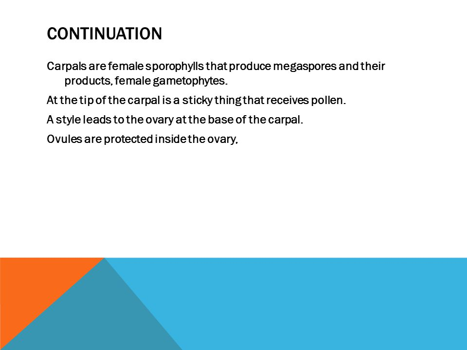 CONTINUATION Carpals are female sporophylls that produce megaspores and their products, female gametophytes.