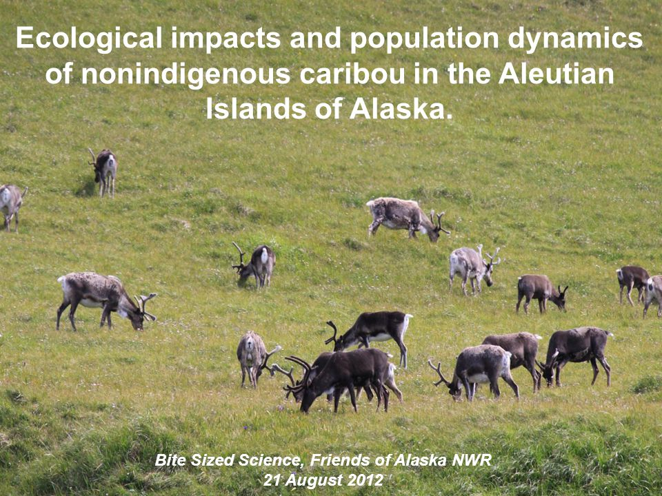 Ecological impacts and population dynamics of nonindigenous caribou in the Aleutian Islands of Alaska. Bite Sized Science, Friends of Alaska NWR 21 Au
