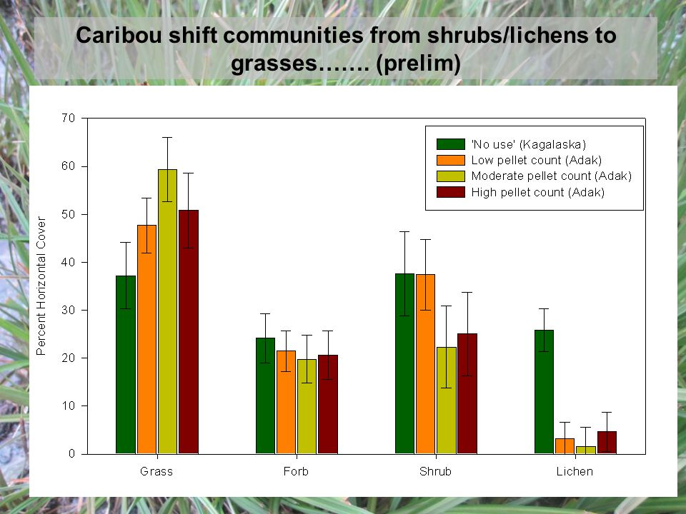Caribou shift communities from shrubs/lichens to grasses……. (prelim)