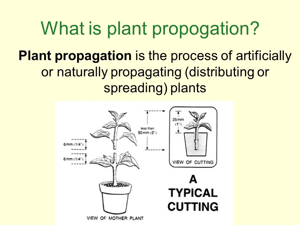 What is plant propogation? Plant propagation is the process of artificially or naturally propagating (distributing or spreading) plants
