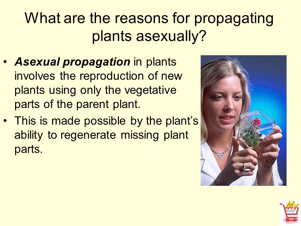 What are the reasons for propagating plants asexually? Asexual propagation in plants involves the reproduction of new plants using only the vegetative