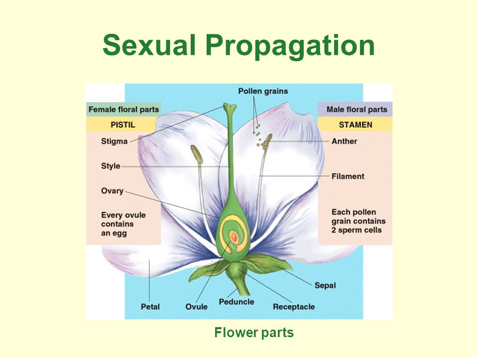 Sexual Propagation Flower parts
