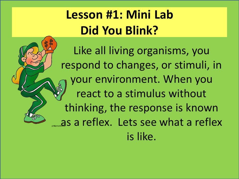 Lesson #1: Mini Lab Did You Blink? Like all living organisms, you respond to changes, or stimuli, in your environment. When you react to a stimulus wi
