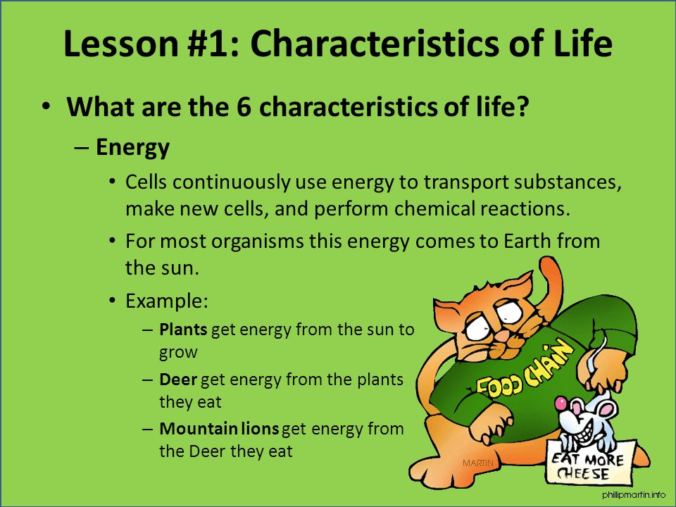 Lesson #1: Characteristics of Life What are the 6 characteristics of life? – Energy Cells continuously use energy to transport substances, make new ce