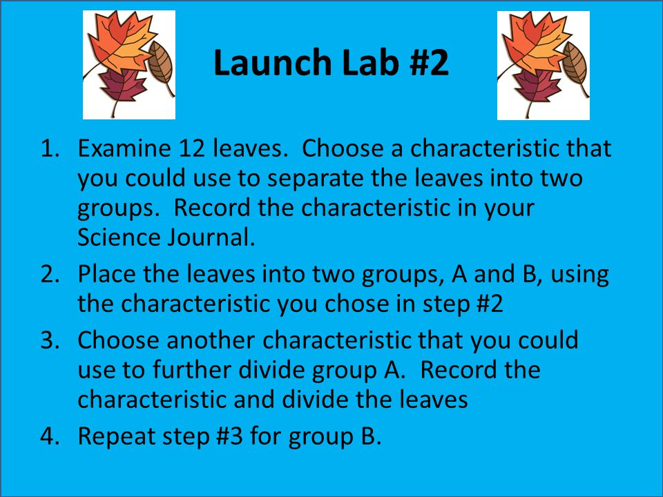 Launch Lab #2 1.Examine 12 leaves. Choose a characteristic that you could use to separate the leaves into two groups. Record the characteristic in you