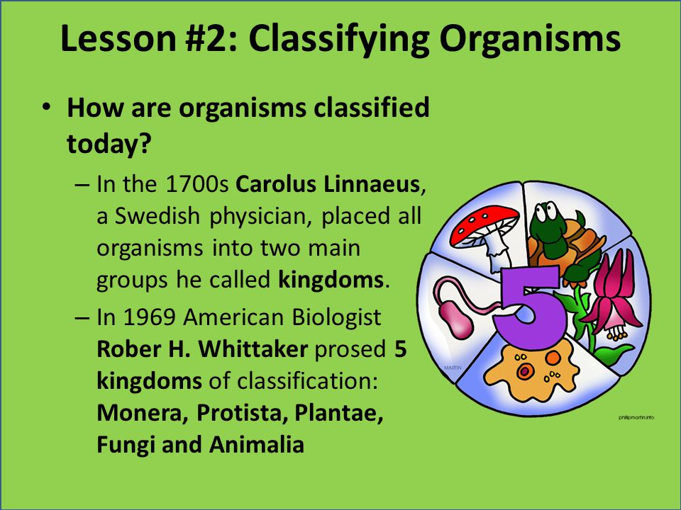 Lesson #2: Classifying Organisms How are organisms classified today? – In the 1700s Carolus Linnaeus, a Swedish physician, placed all organisms into t