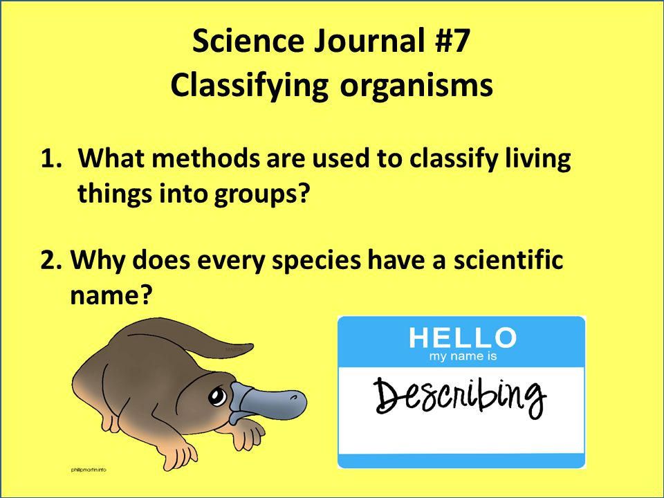 Science Journal #7 Classifying organisms 1.What methods are used to classify living things into groups? 2. Why does every species have a scientific na