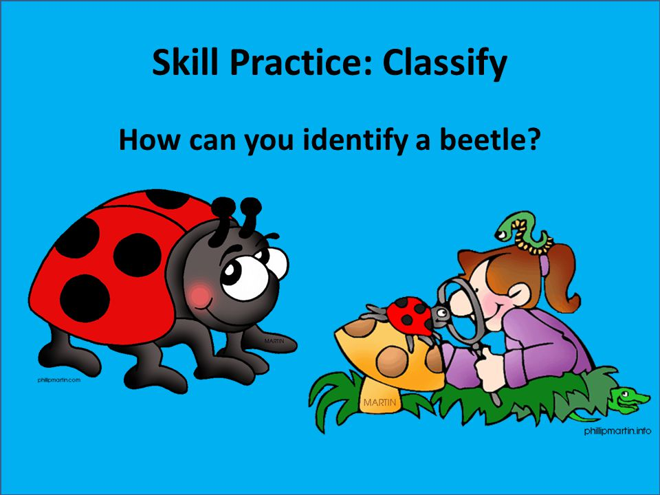 Skill Practice: Classify How can you identify a beetle?