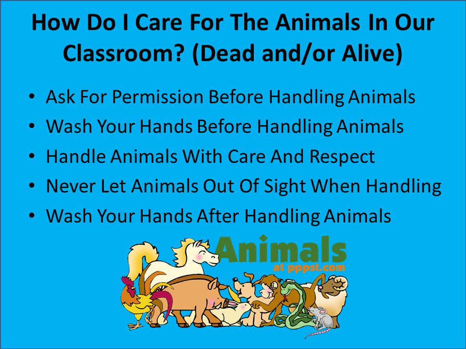 How Do I Care For The Animals In Our Classroom? (Dead and/or Alive) Ask For Permission Before Handling Animals Wash Your Hands Before Handling Animals