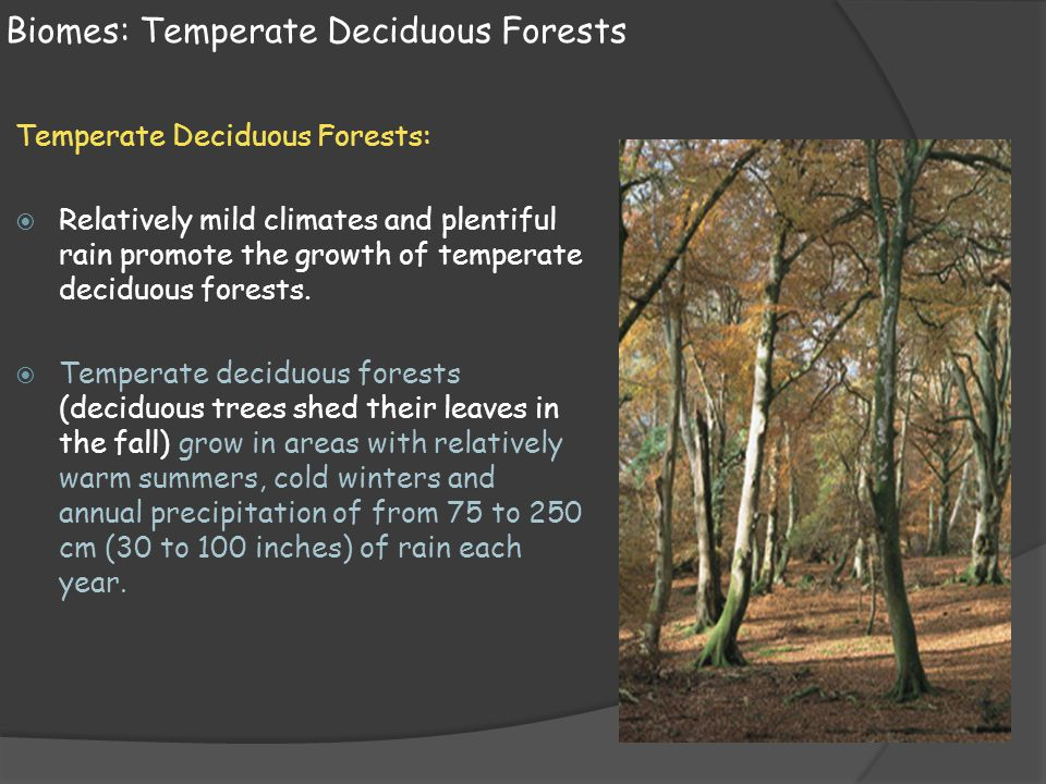 Biomes: Temperate Deciduous Forests Temperate Deciduous Forests:  Relatively mild climates and plentiful rain promote the growth of temperate deciduo