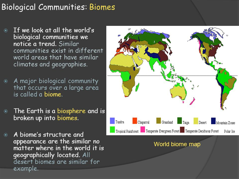 Biomes: Deserts Deserts:  Deserts are most extensive in the interiors of continents.