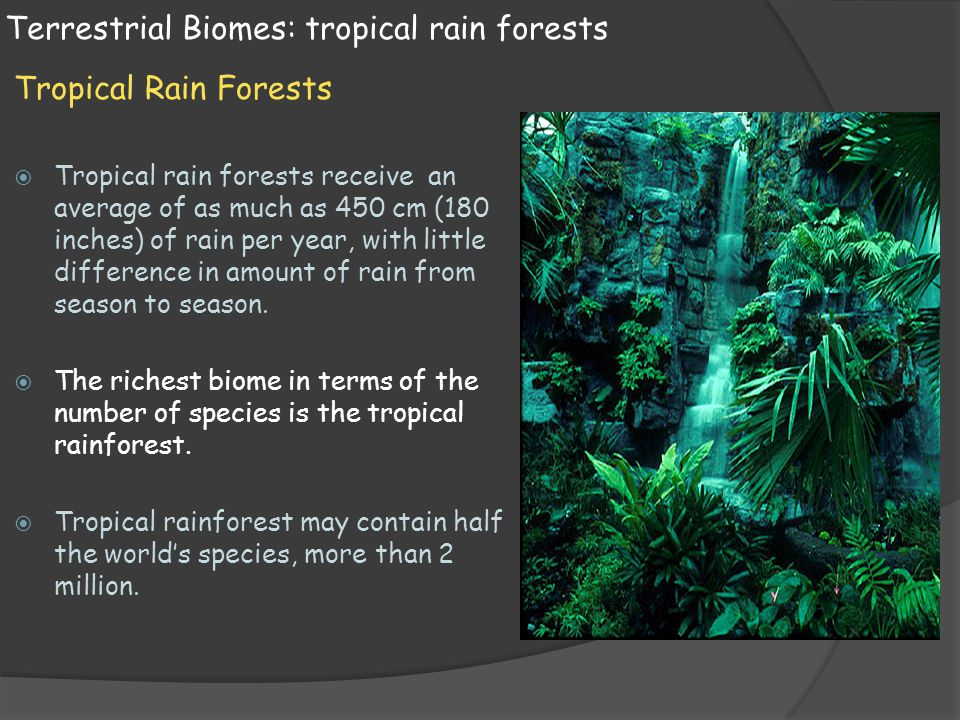 Terrestrial Biomes: tropical rain forests Tropical Rain Forests  Tropical rain forests receive an average of as much as 450 cm (180 inches) of rain p