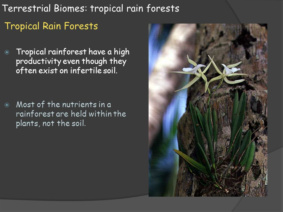 Terrestrial Biomes: tropical rain forests Tropical Rain Forests  Tropical rainforest have a high productivity even though they often exist on inferti